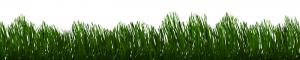 Tipy ako založiť trávnik