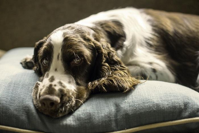 Vankus pre psa na príjemný spánok